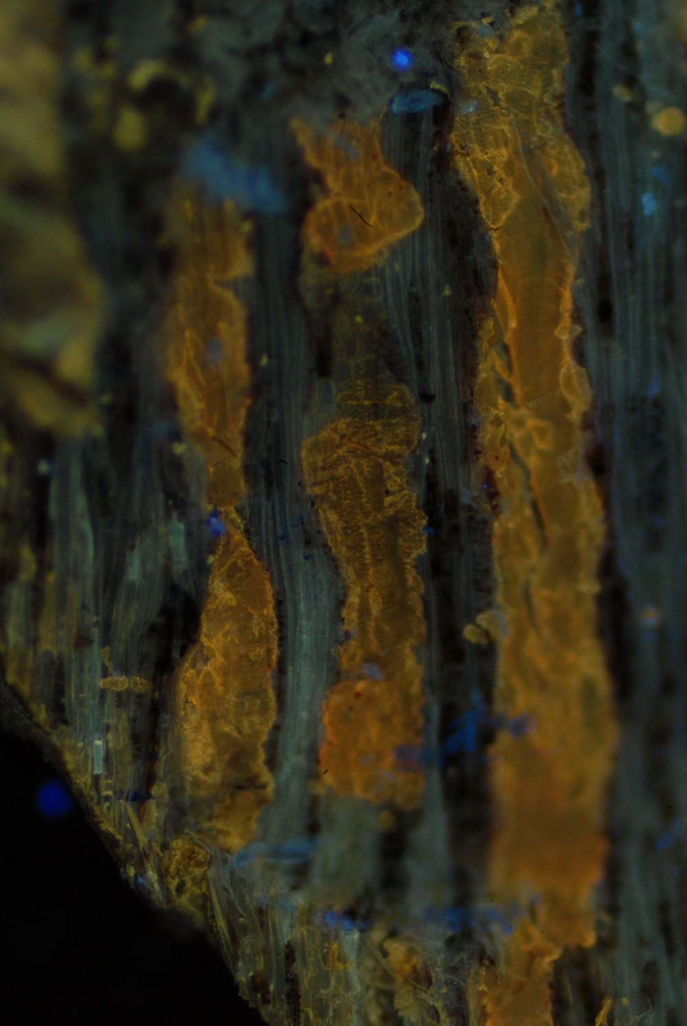 11 sezione lucida - rinvenimento di gommalacca posta tra le fibre lignee